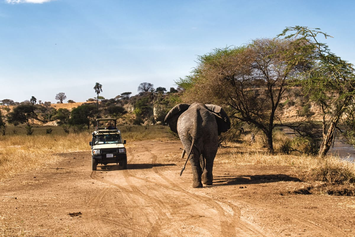 Planning a Safari to Africa