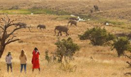 When to go on Africa Safari