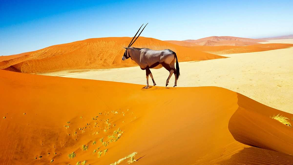 2 Day Sossusvlei Tour from Windhoek