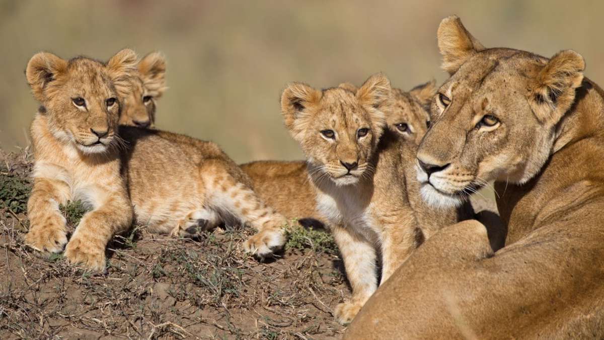 3 Day Masai Mara Camping Safari
