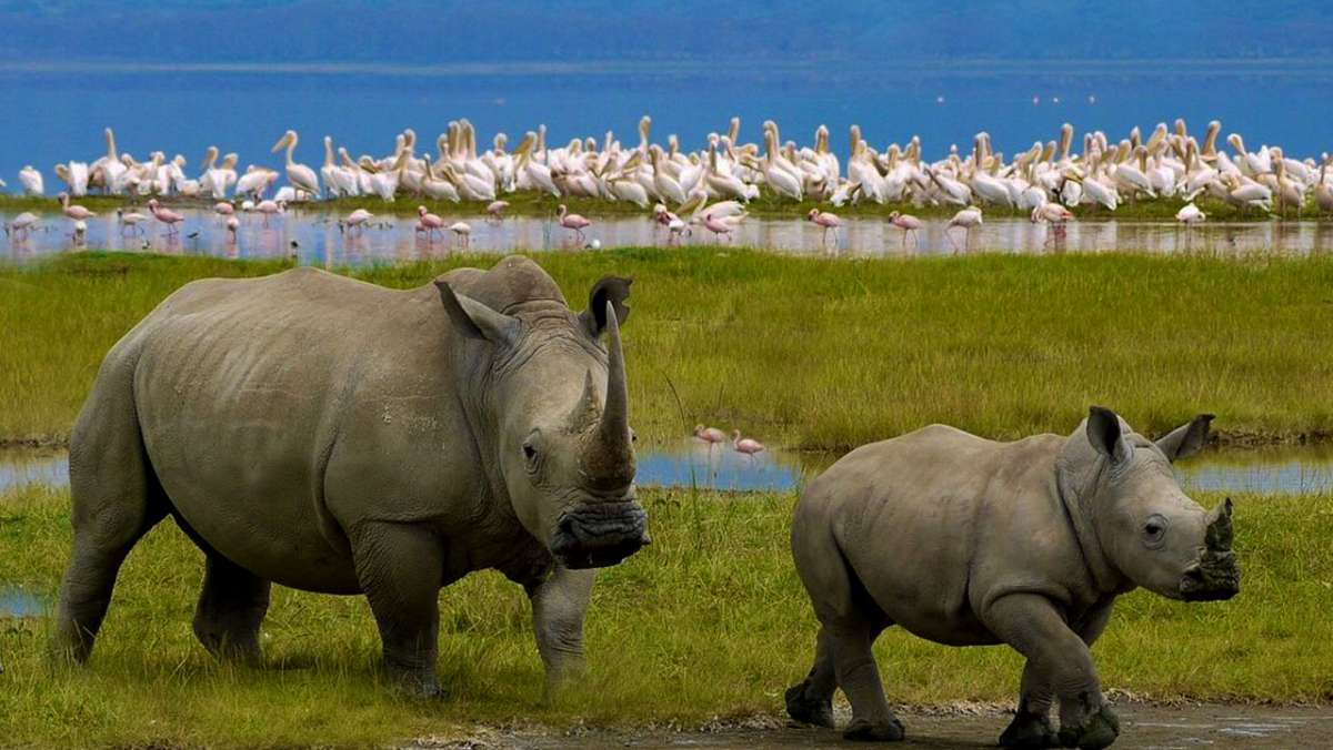 4 Day Cheap Safari in Kenya