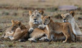 5 Day Luxury Safari in Kenya