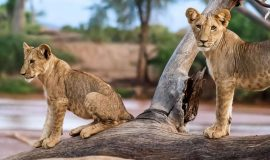 5 Days Best Luxury Safari in Kenya