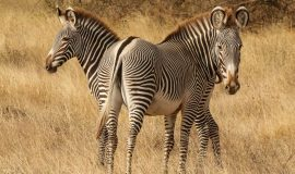 7 day Flying Safari in Kenya