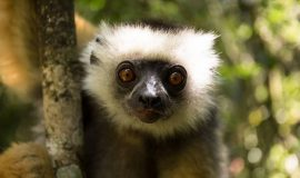 Best Madagascar Tour