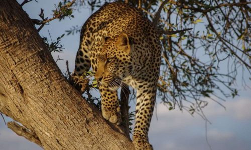 3 Day Budget Akagera National Park Safari Tour